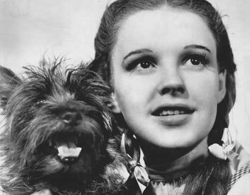 Judy Garland as Dorothy in the Wizard of Oz holding Toto